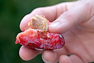 JuicyFlavorKingPluot