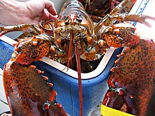 GiantLobster