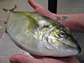 FishinHand