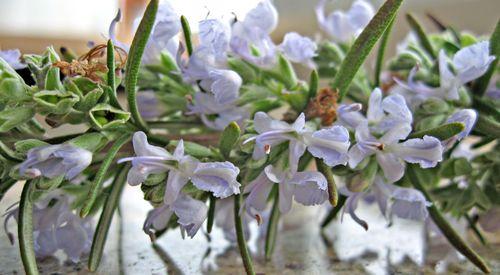 RosemaryBlossoms