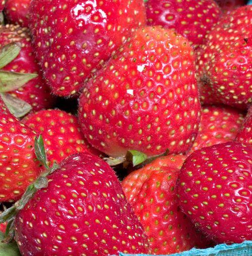 ShadyBrookStrawberries