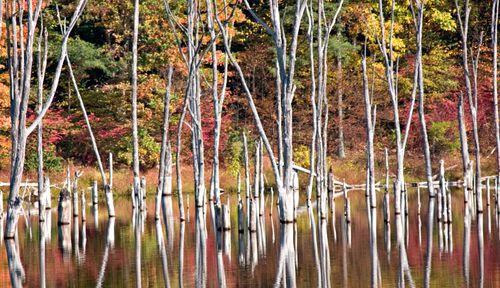 WaterWeatheredTrees