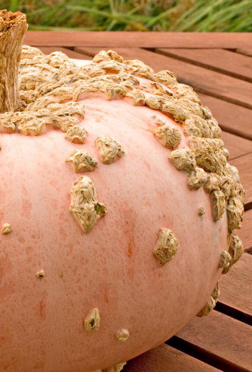 PeanutPumpkinHalf