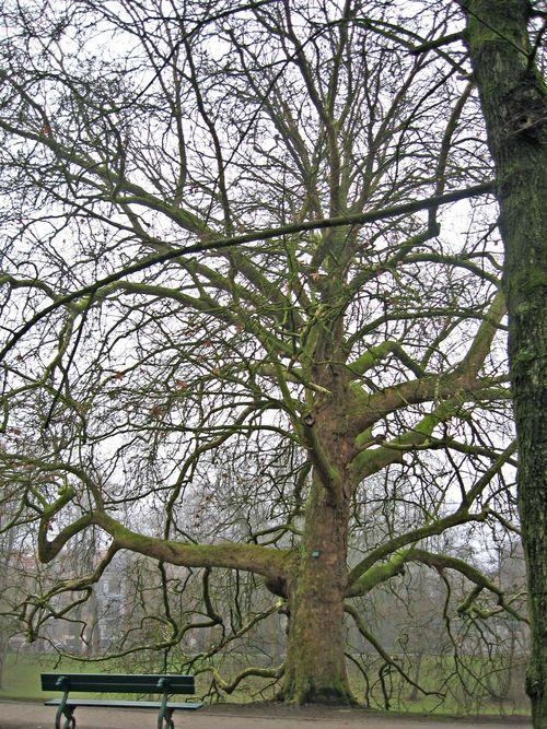 TreeinBrugge