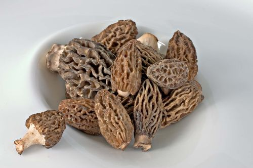 FirstOfTheSeasonMorels