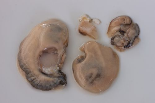 OysterParts