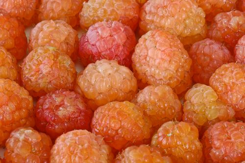 GoldenRaspberries