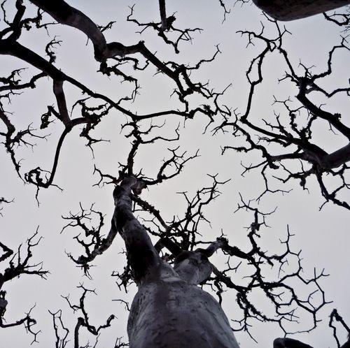 TreeLookUp