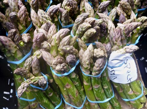 GiantAsparagus