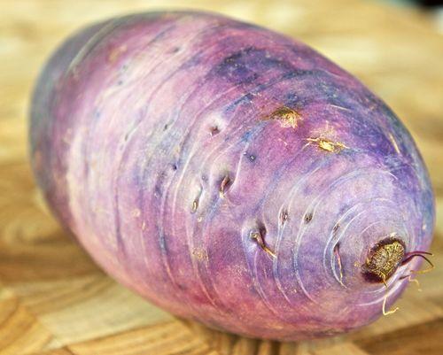 PurpleTurnip