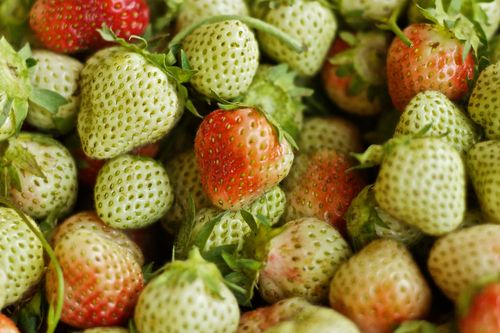 GreenStrawberries