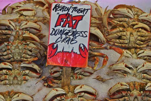 FatDungenessCrabs