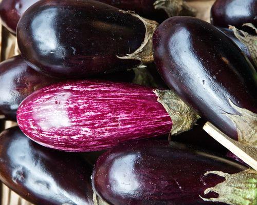 EggplantStandOut