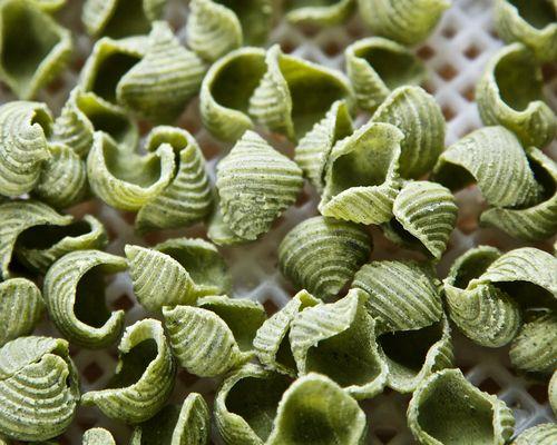 SeaweedShells