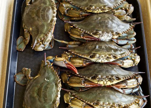 SoftshellCrabs