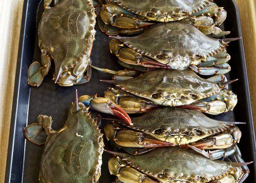 SoftshellCrabs