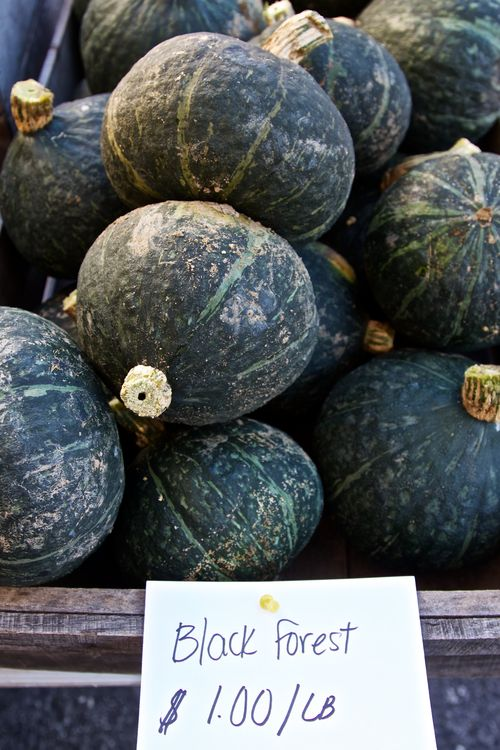 BlackForestSquash