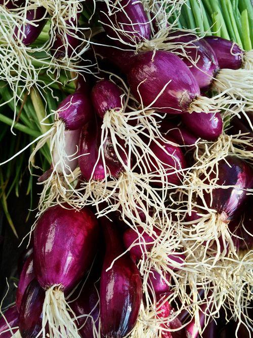 PurpleOnions