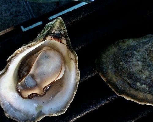 Grilled-Island-Creek-Oyster