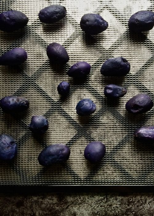 Drying-Purple-Potatoes
