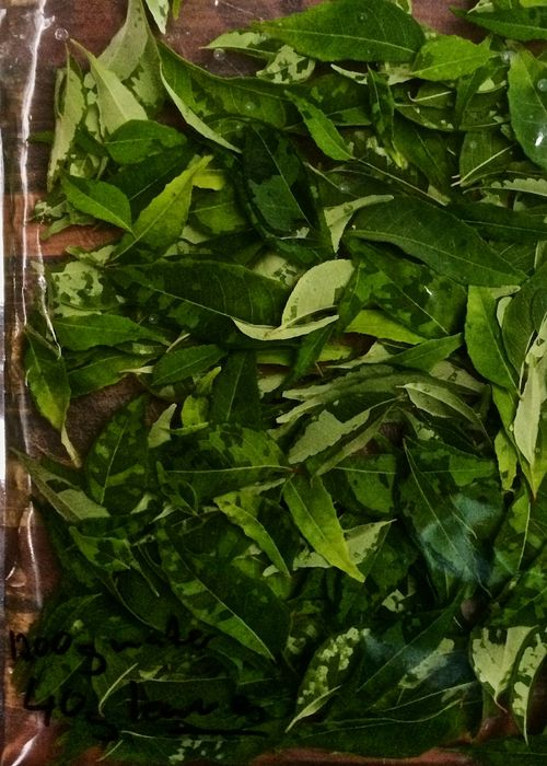 Curry-Leaf-Water