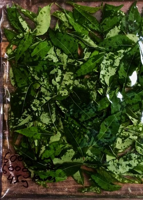 Curry-Leaves-Sugar-Water-Dissolved