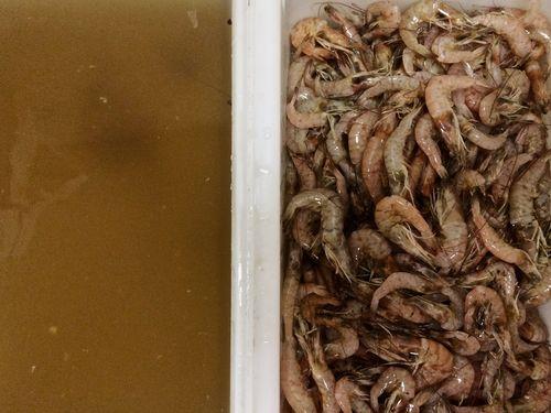 Brined-Shrimp
