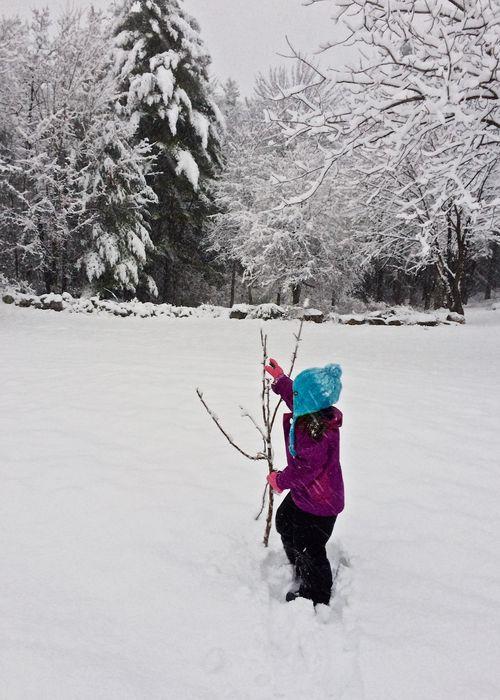 Amaya-Apple-Tree-Snow