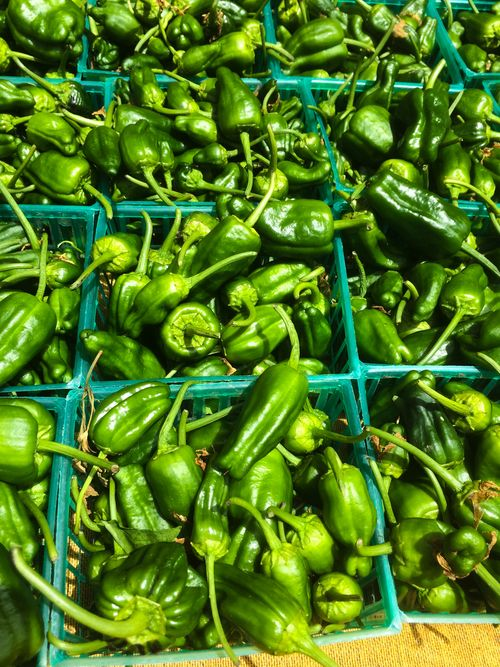 PadronPeppers-July 25, 2015